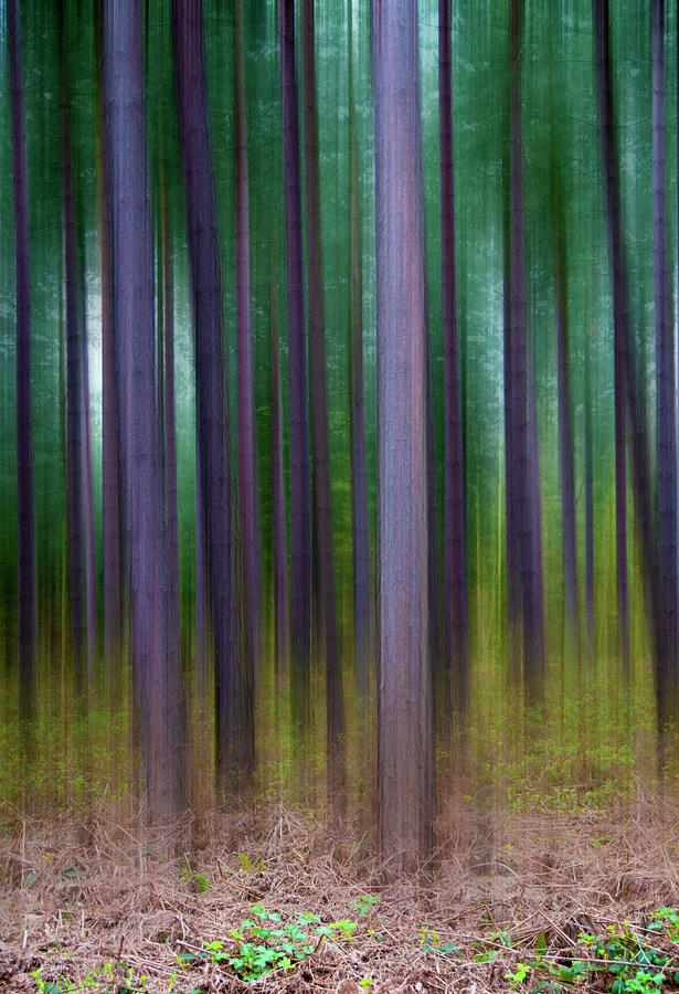 Forest Photograph - Forest Abstract02 by Svetlana Sewell