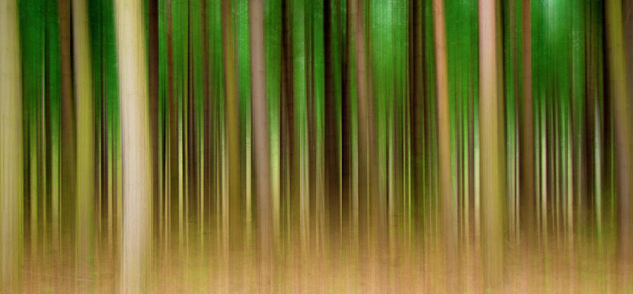 Forest Photograph - Forest Abstract04 by Svetlana Sewell