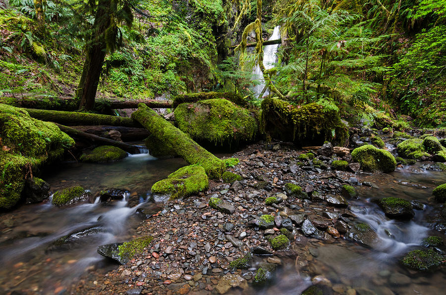 Oregon Photograph - Forest Adventures by Margaret Pitcher