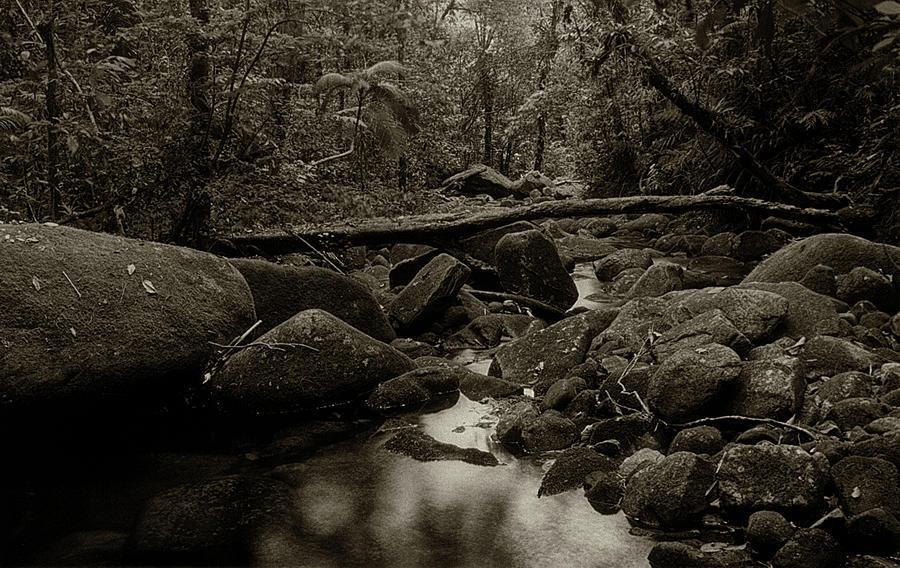 Atlantic Forest by Amarildo Correa