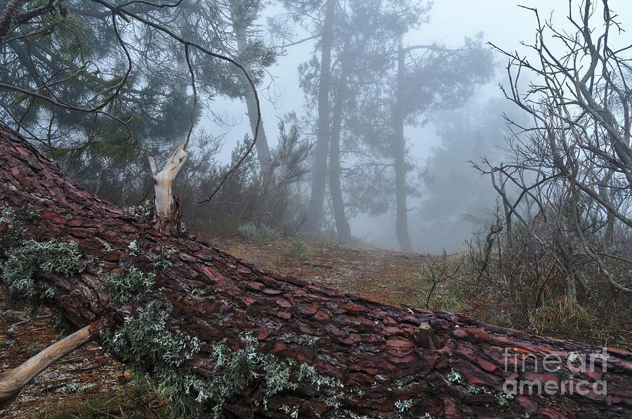 Serra Da Estrela Photograph - Forest And Fog In Serra Da Estrela by Angelo DeVal