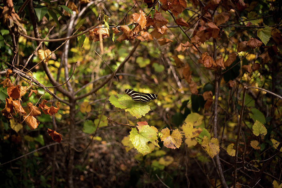 Image Photograph - Forest Butterfly by Ryan Stoddard