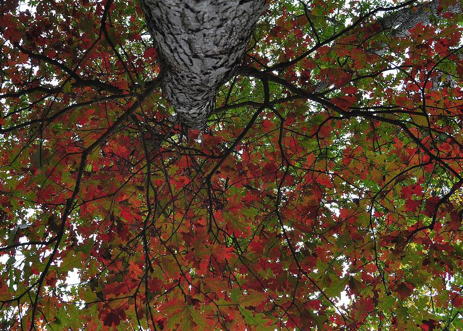 Fall Photograph - Forest Canopy by JAMART Photography