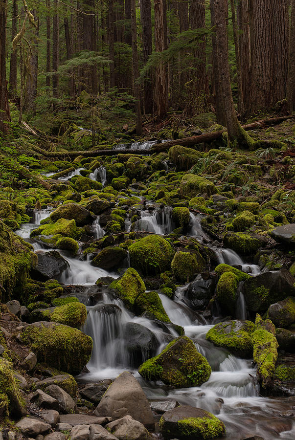 Olympic National Park Photograph - Forest Cathederal by Mike Reid