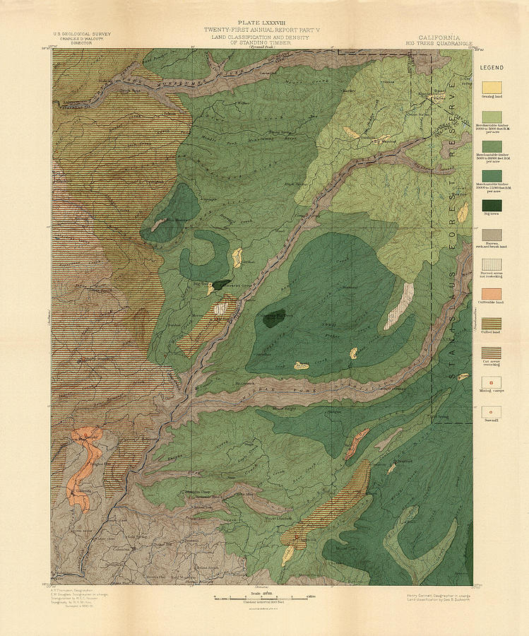 Forest Cover Map 1886-87 - Big Trees Quadrangle - California - Geological Map Drawing