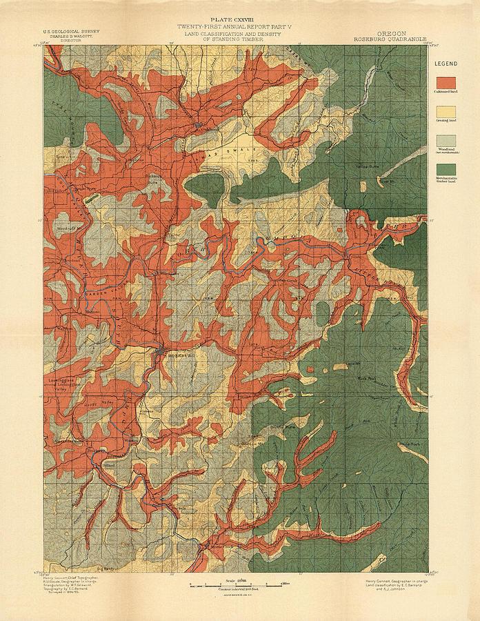 Forest Cover Map 1886-87 - Roseburg Quadrangle - Oregon - Geological Map Drawing