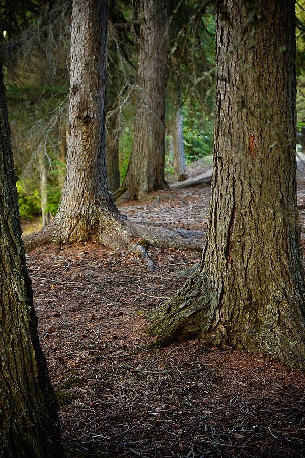 Glacier Photograph - Forest Feet by Jon Woodbury