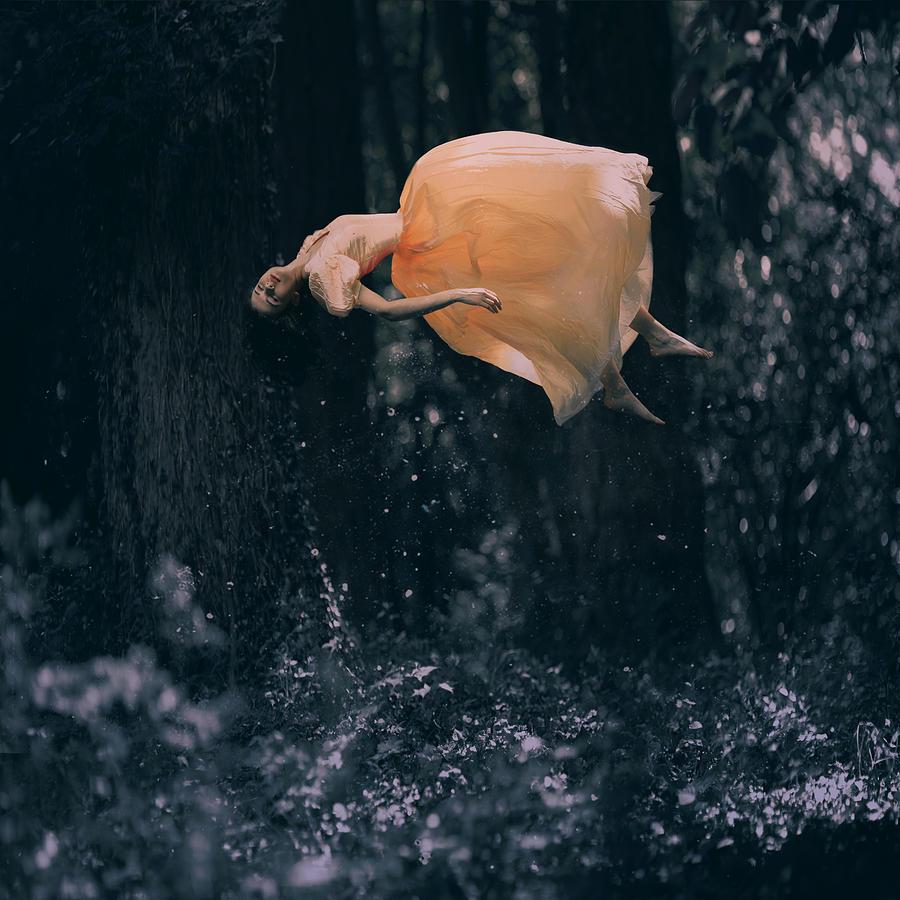 Landscape Photograph - Forest Floating by Anka Zhuravleva