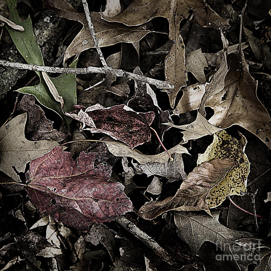Forest Floor Photograph - Forest Floor - Leaf 10 by Pete Hellmann