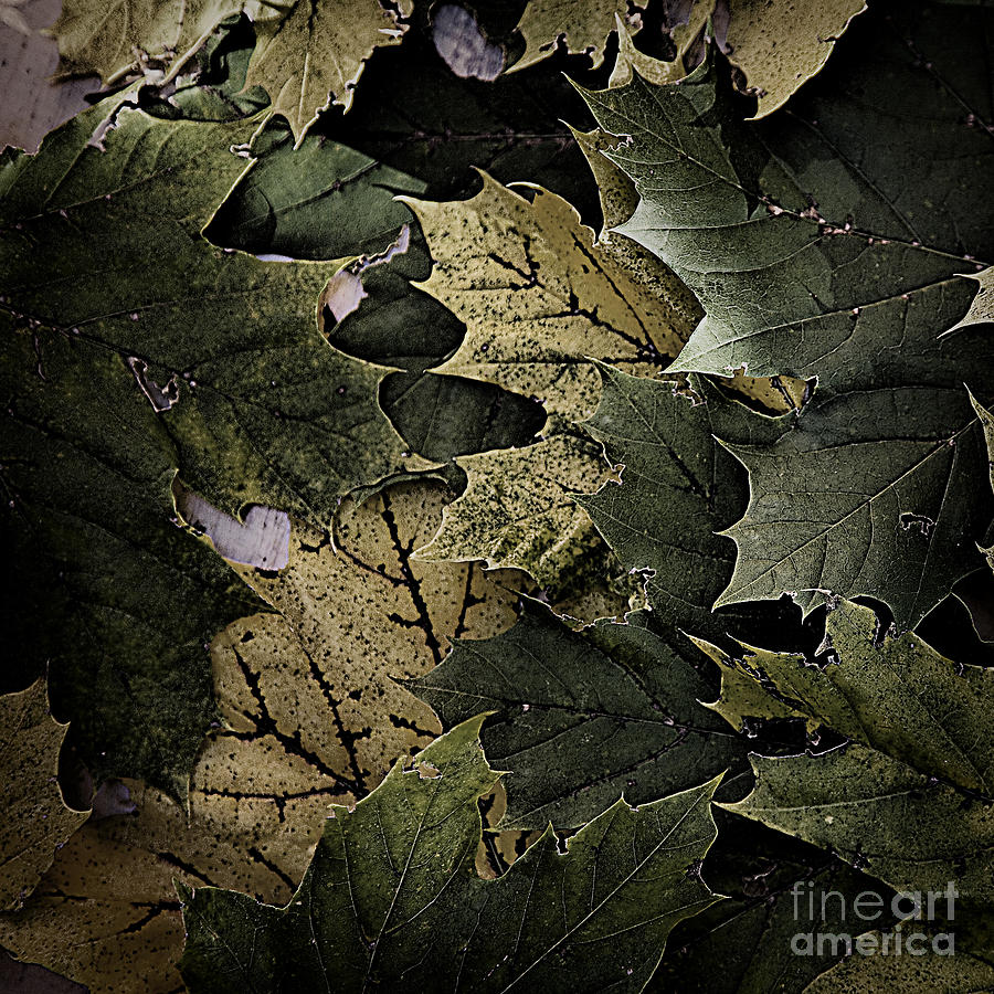 Forest Floor Photograph - Forest Floor - Leaf 12 by Pete Hellmann