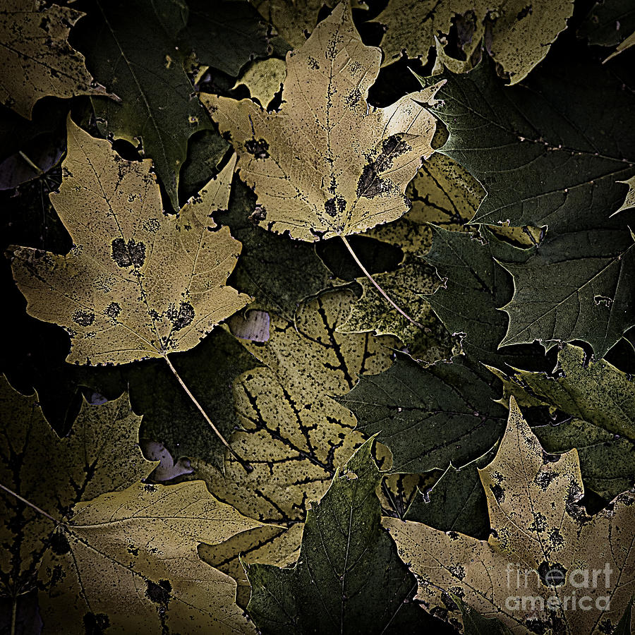 Forest Floor Photograph - Forest Floor - Leaf 13 by Pete Hellmann