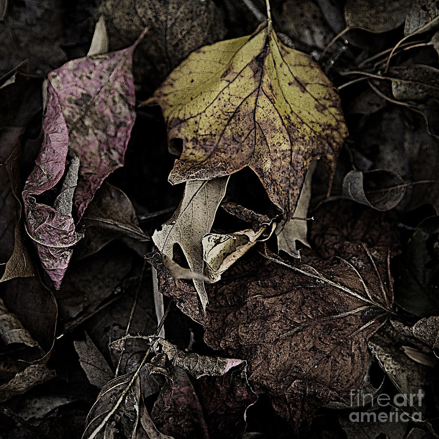 Forest Floor Photograph - Forest Floor - Leaf 9 by Pete Hellmann