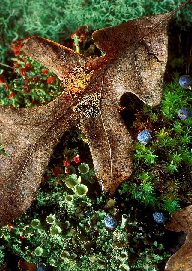 Oak Photograph - Forest Floor Detail by Lloyd Grotjan