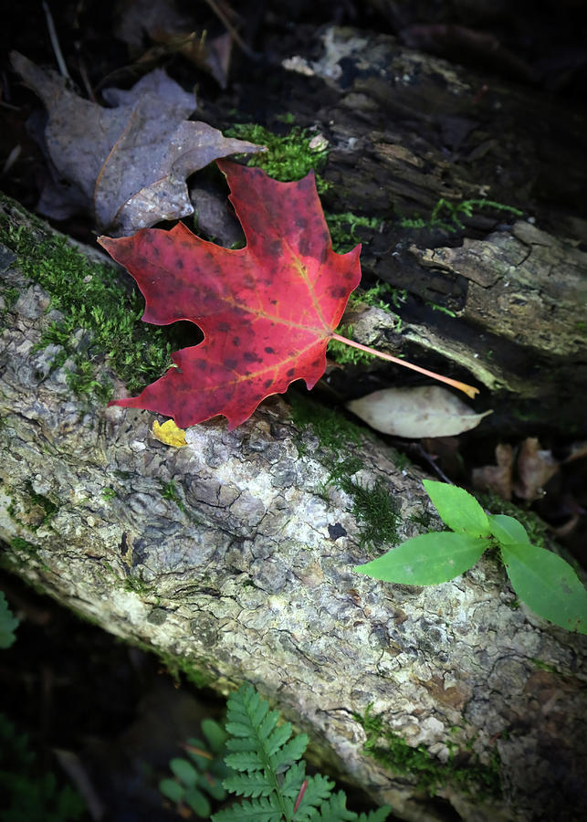 Woodland Photograph - Forest Floor In Autumn by Brooke T Ryan