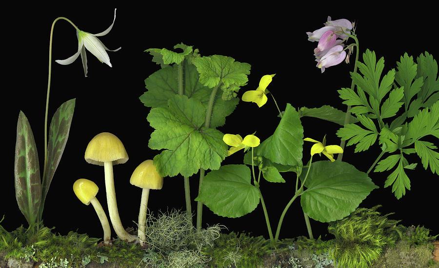 Mushrooms Digital Art - Forest Floor by Sandi F Hutchins
