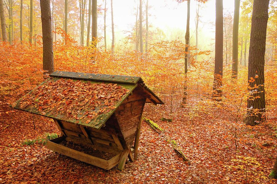 Autumn Photograph - Forest In Autumn With Feed Rack by Matthias Hauser