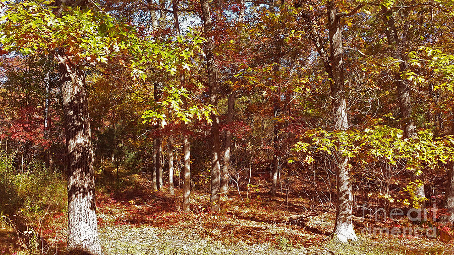 Forest Photograph - Forest In Bright Sunlight by Mary Ann Weger
