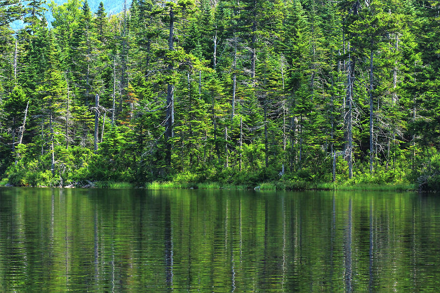 Forest Photograph - Forest Lake by Brian Pflanz