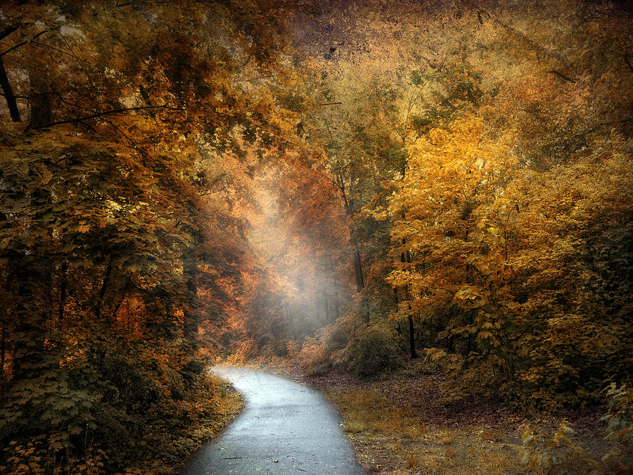 Nature Photograph - Forest Light by Jessica Jenney