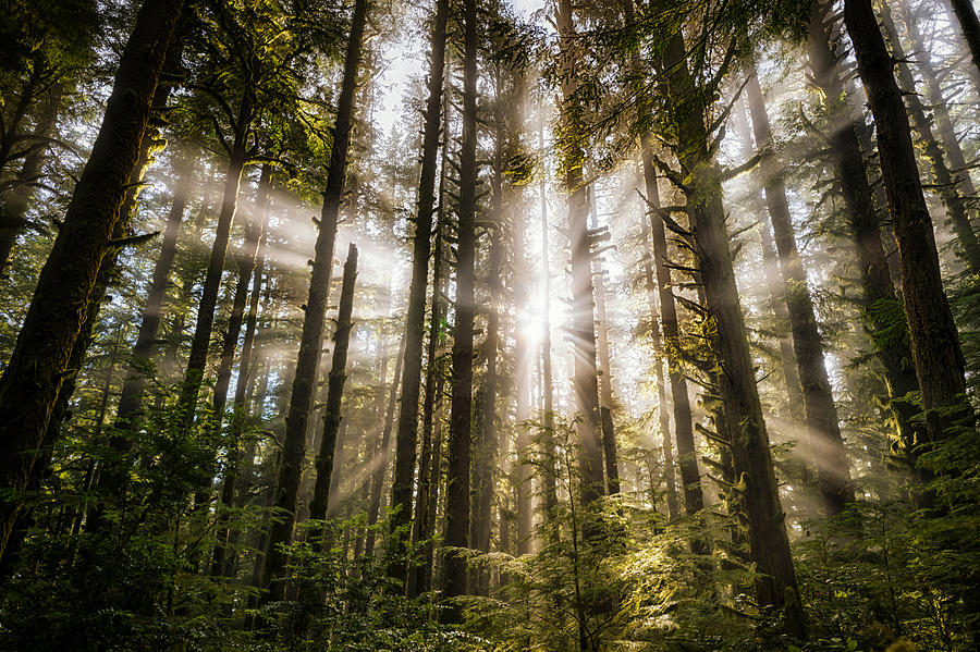Forest Light Rays Photograph By Bo Nielsen