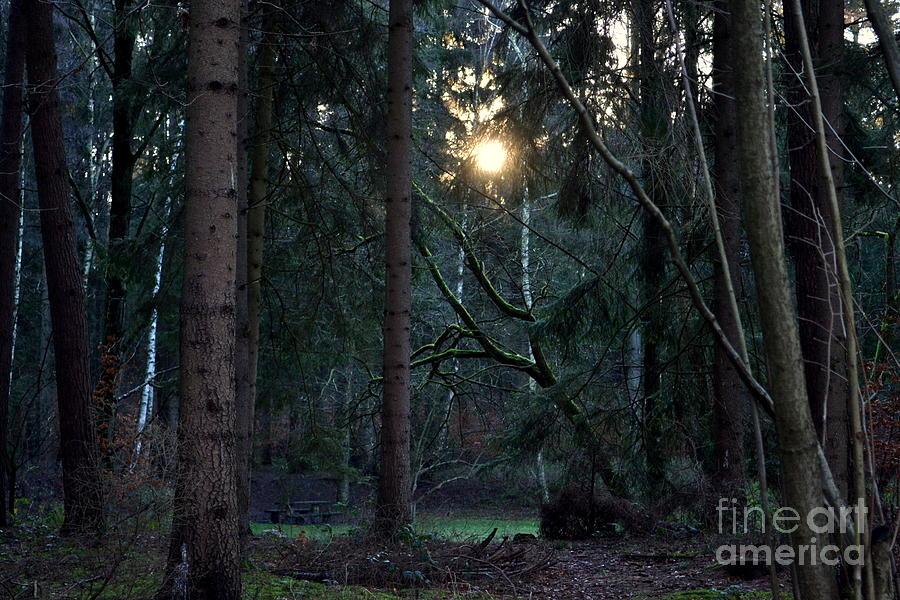 Forest Photograph - Forest Magic 7 by Angelika Heidemann
