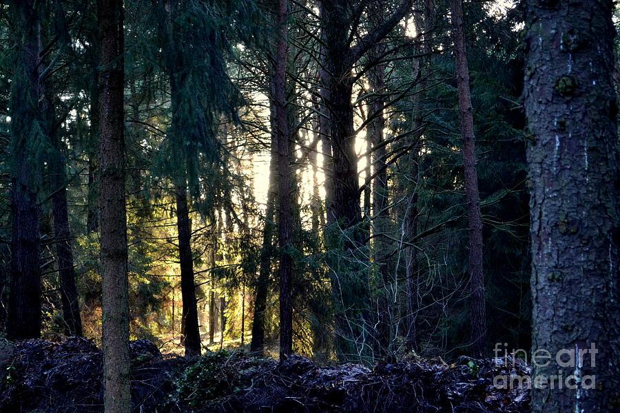 Forest Photograph - Forest Magic 8 by Angelika Heidemann