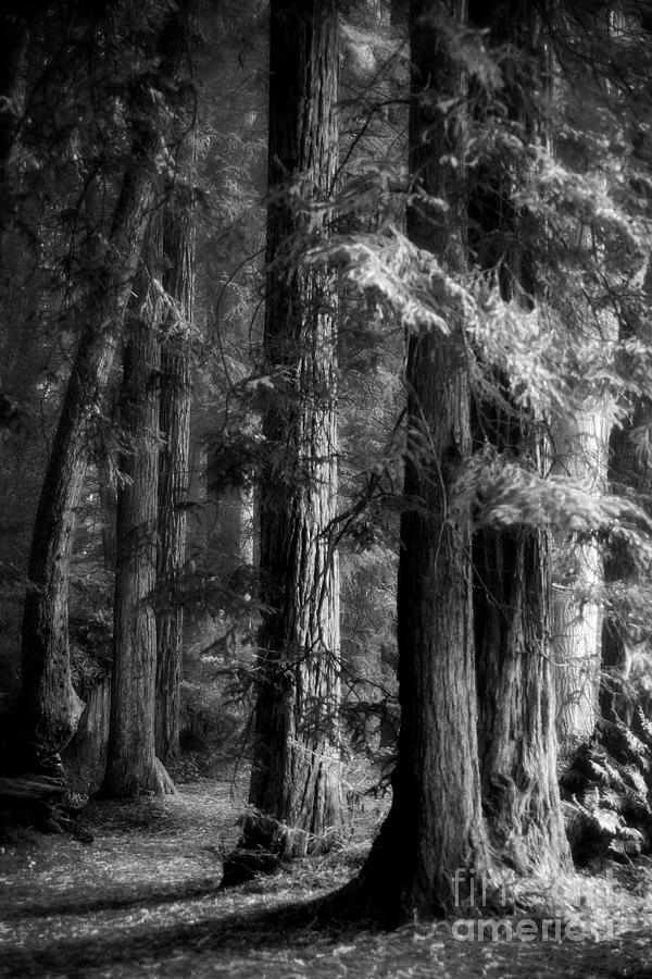 Forest Monochrome by Mark Alder