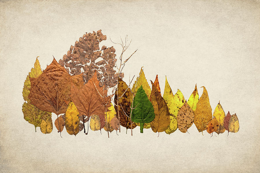 Forest Photograph - Forest Of Autumn Leaves I by Tom Mc Nemar