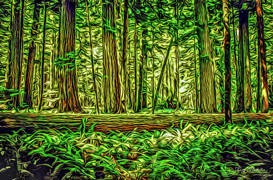 Forest of Cathedral Grove by Roxy Hurtubise
