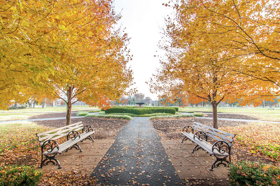 Forest Park Photograph - Forest Park Benches by Steven Jones