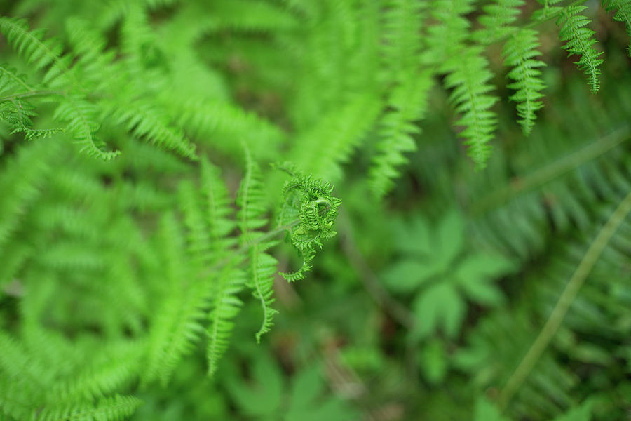 Forest park ferns by Kunal Mehra