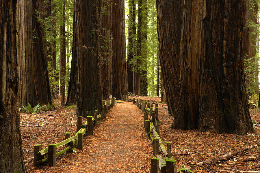 California Photograph - Forest Path by Eric Foltz
