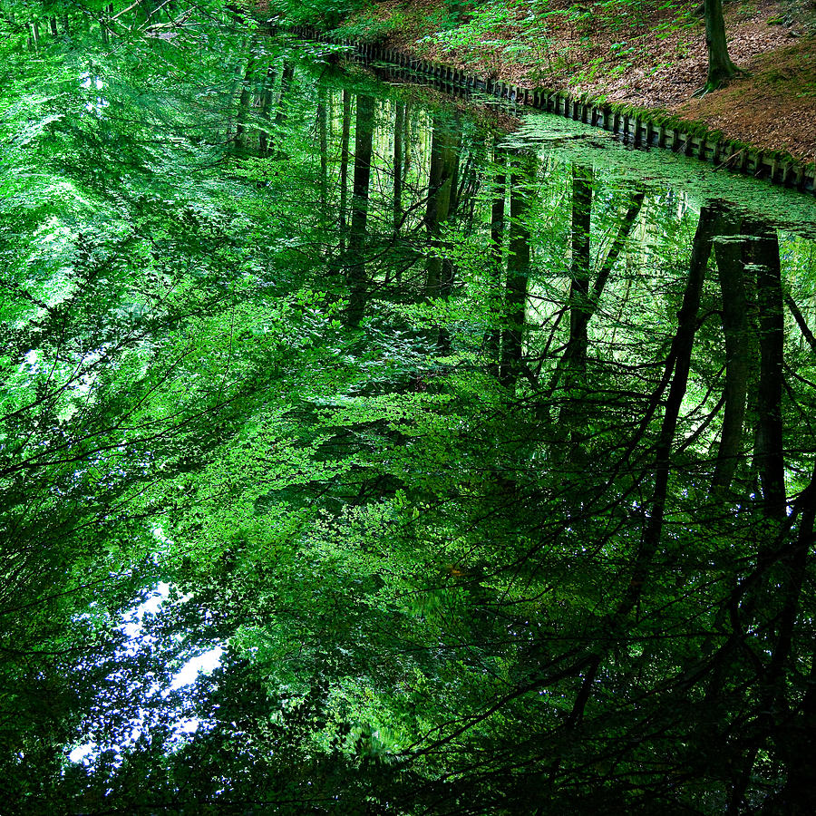 Forest Photograph - Forest Reflection by Dave Bowman