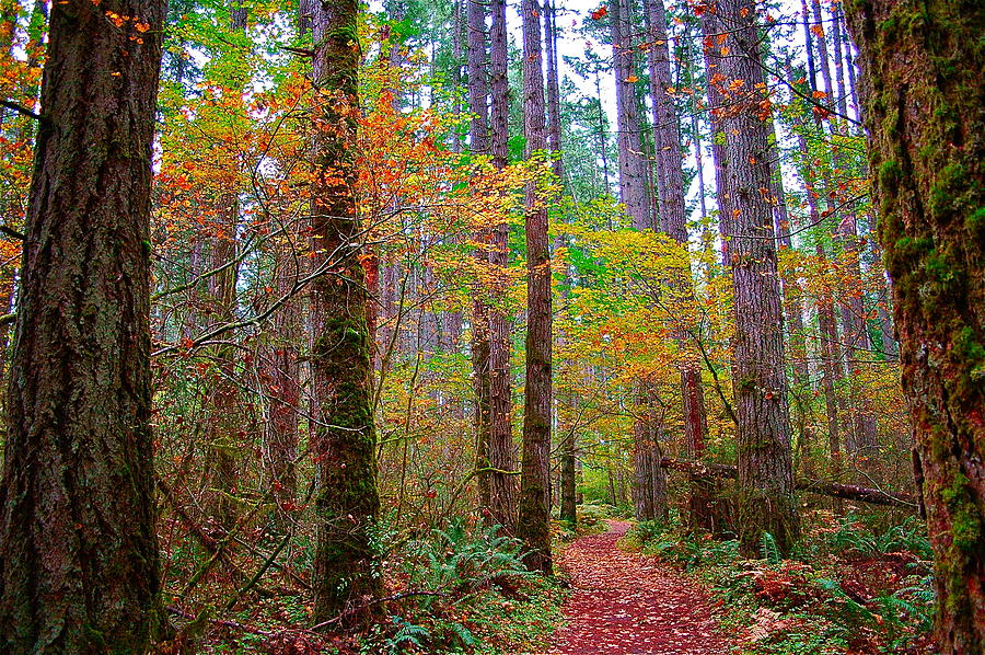 Nature Photograph - Forest Road by Mark Lemon