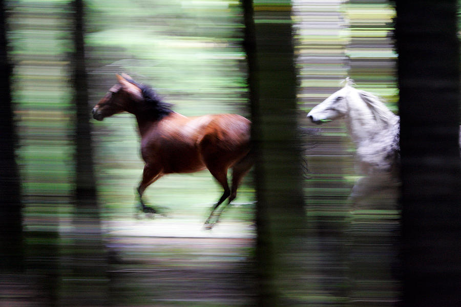 Mustang Photograph - Forest Run by Randall Ingalls