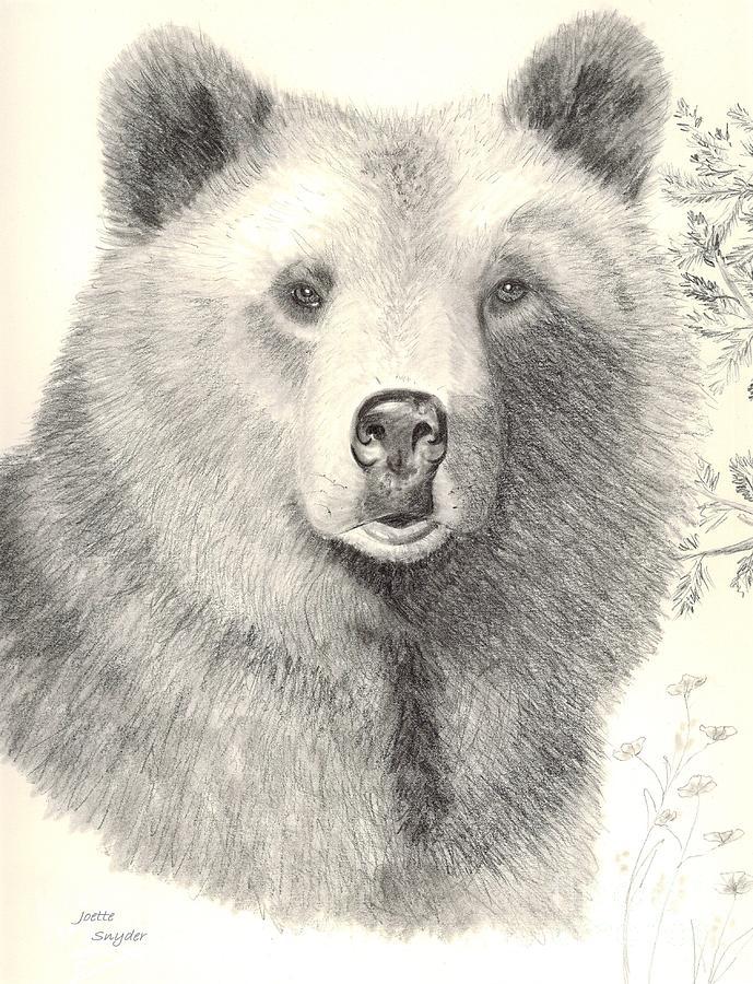 Alaskan Brown Bear Drawing - Forest Sentry by Joette Snyder