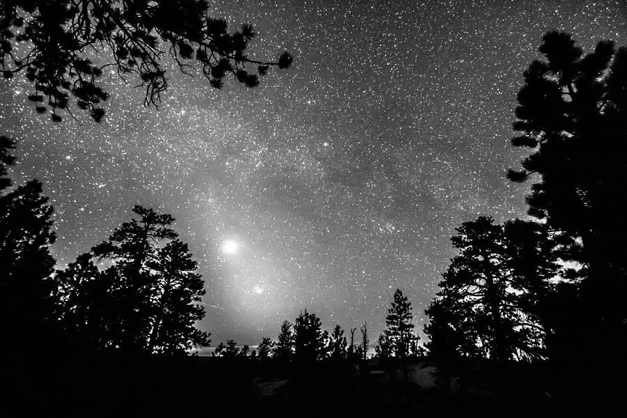 Sky Photograph - Forest Silhouettes Constellation Astronomy Gazing by James BO  Insogna
