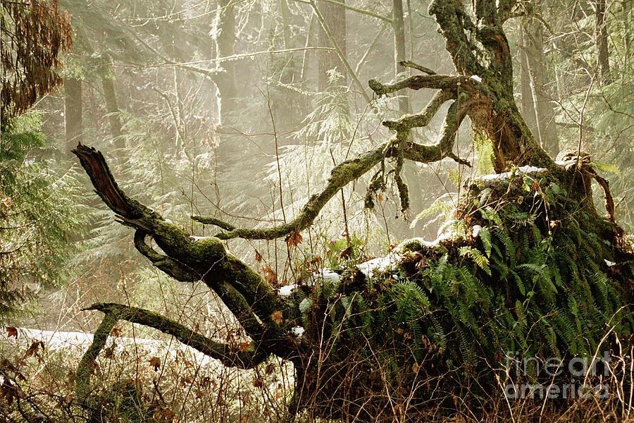 Forest Spirit Photograph - Forest Spirit by Rose De Dan