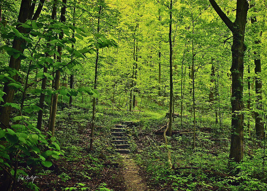 Canada Photograph - Forest Stairs by Phill Doherty