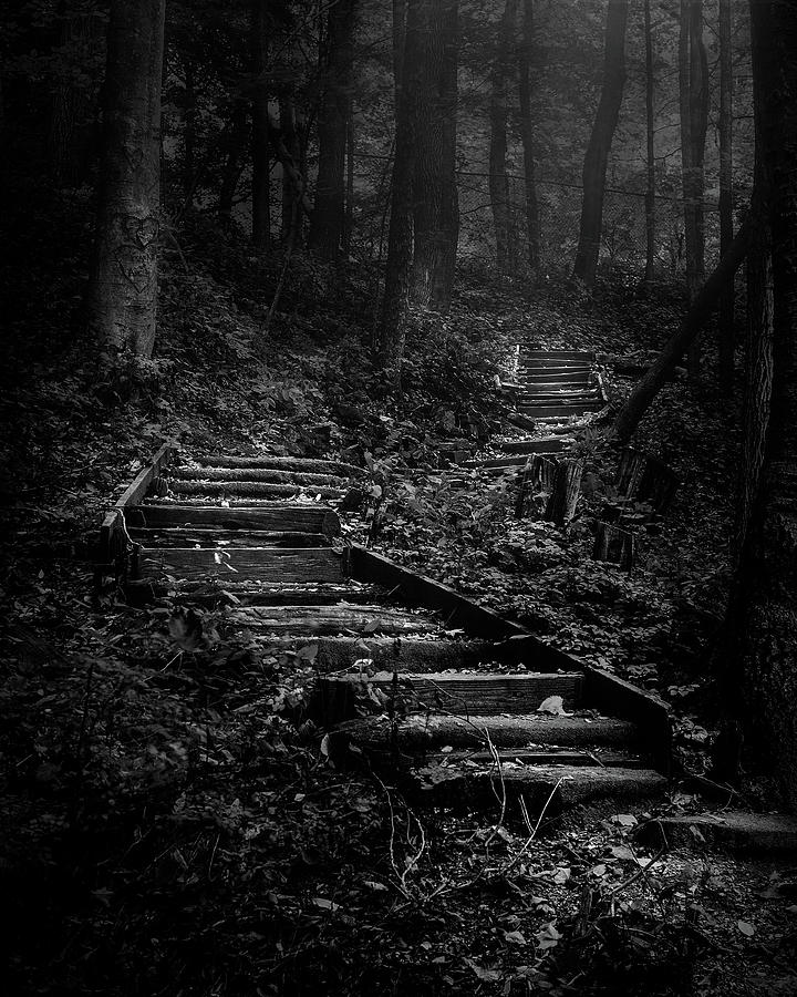 Forest Stairs Photograph