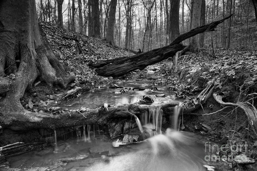 Forest Stream 2 Photograph