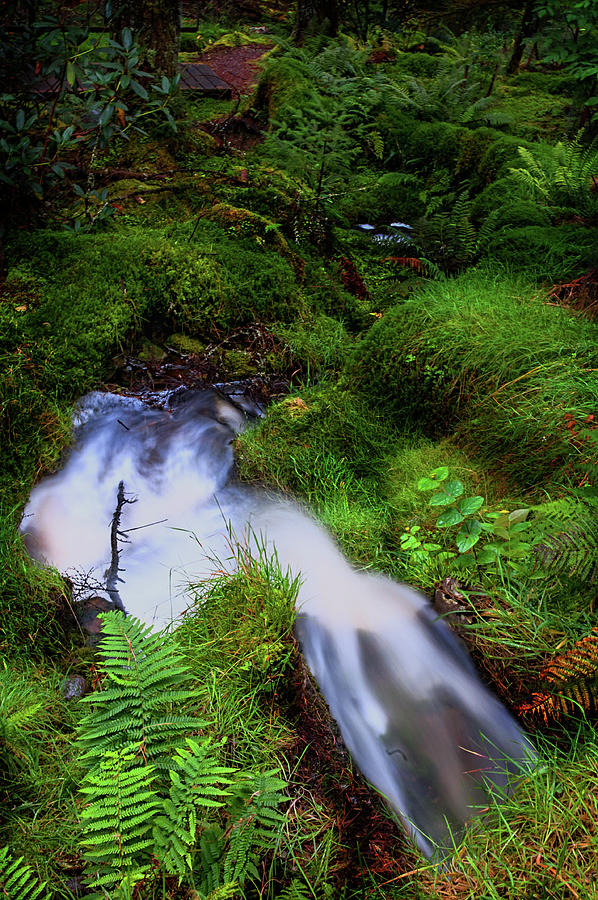 Forest Photograph - Forest Stream. Benmore Botanic Garden by Jenny Rainbow