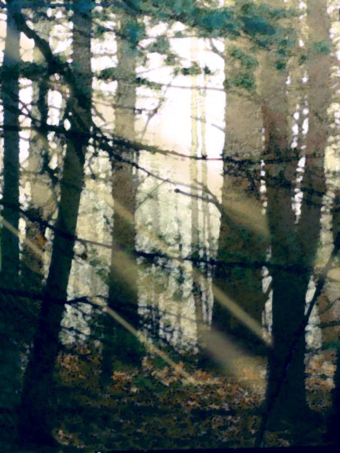 Forest Painting - Forest Sunrise by Paul Sachtleben