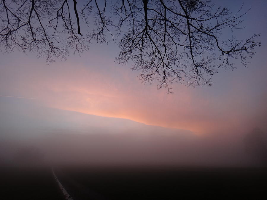 Sunset Photograph - Forest Sunset in Fog by Two Small Potatoes