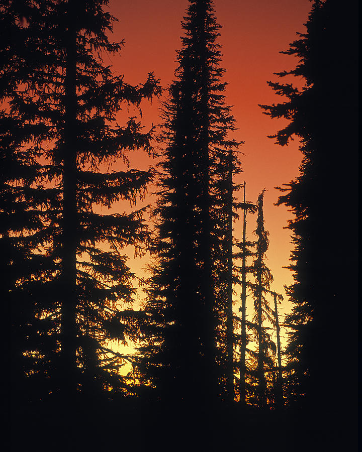 Clearwater National Forest Photograph - Forest Sunset by Leland D Howard
