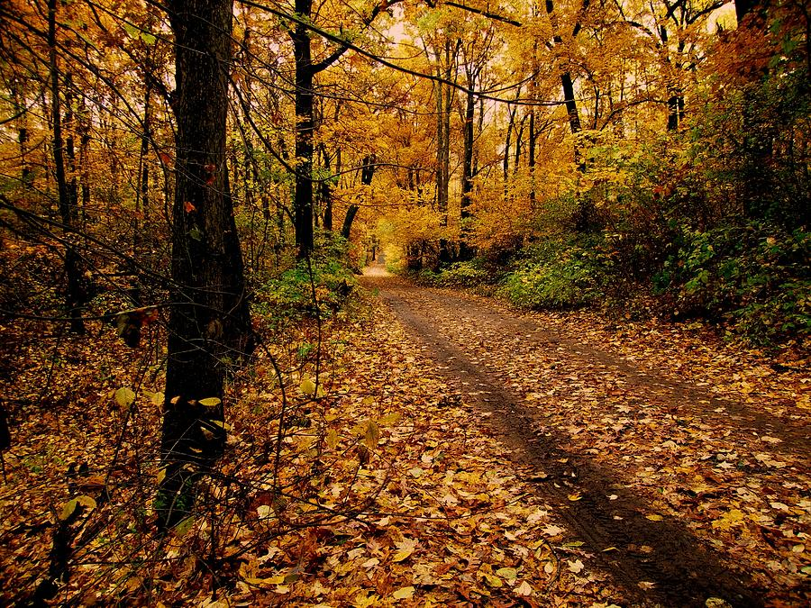 Forest Photograph - Forest Trail by Scott Hovind