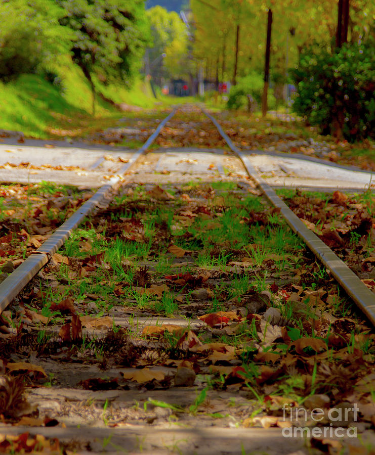 Forest Train Track Photograph