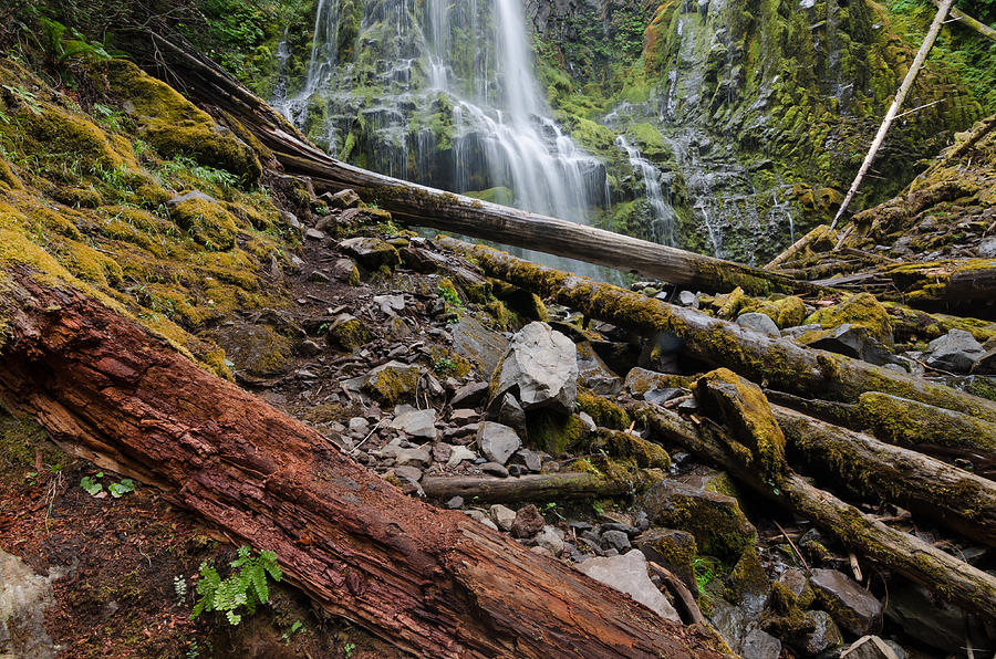 Waterfall Photograph - Forest Vibrance by Margaret Pitcher