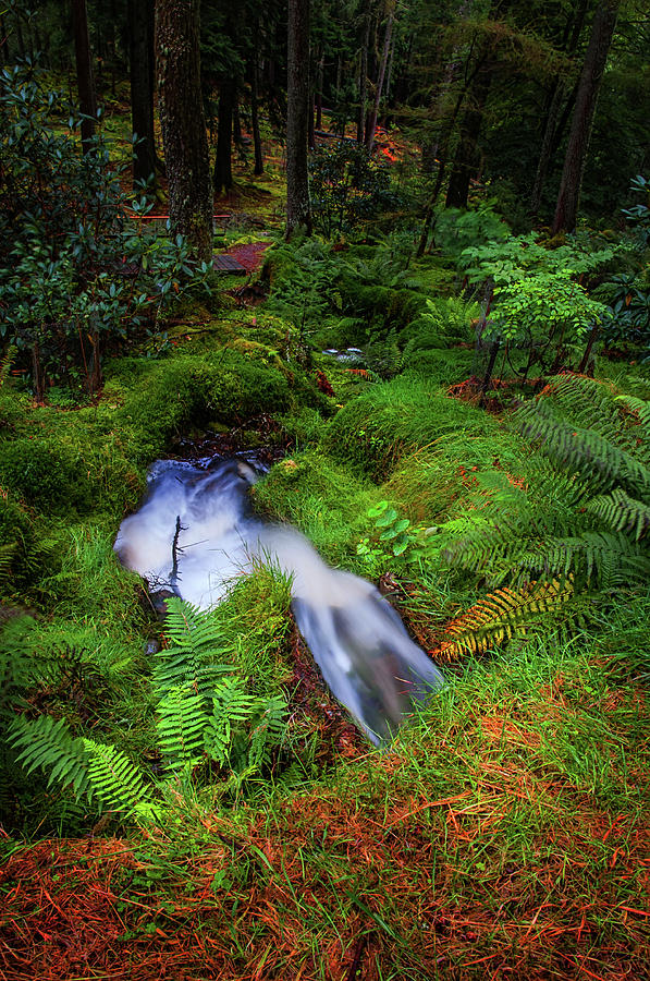 Forest Photograph - Forest  Water Stream. Benmore Botanic Garden by Jenny Rainbow