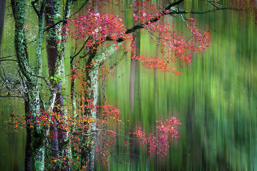Appalachia Photograph - Forest Zen Dreamscape by Debra and Dave Vanderlaan